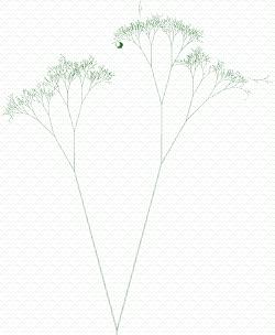 Googlebot tree
